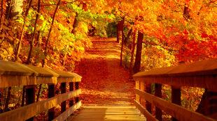 Drzewa malowane czerwienią, żółcią i pomarańczem. Jak rodzi się złota polska jesień?