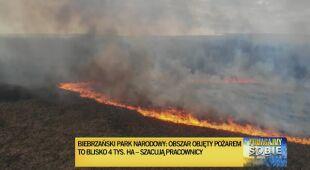 Płoną tereny bagiennych łąk i lasu