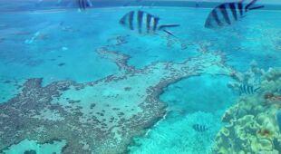Trwa obumieranie Wielkiej Rafy Koralowej